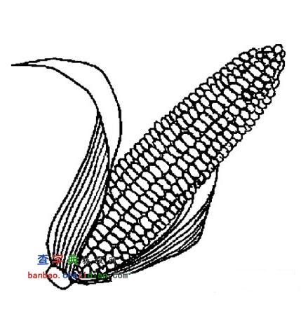 蔬菜简笔画:玉米